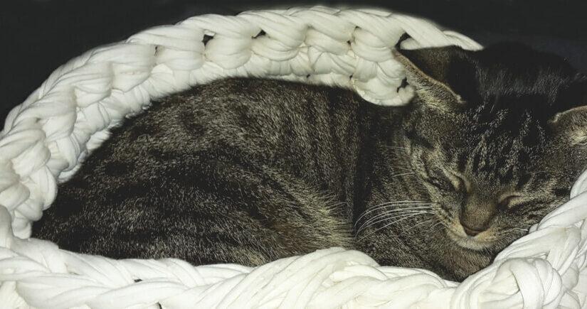 Katzenkorb Imkerkorb Co Textilgarn Bändchengarn Und Dicke Wolle