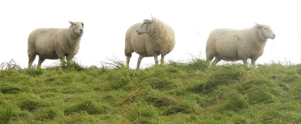 Filzseil - aus heimischer Wolle